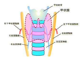 甲状腺 が ん 症状